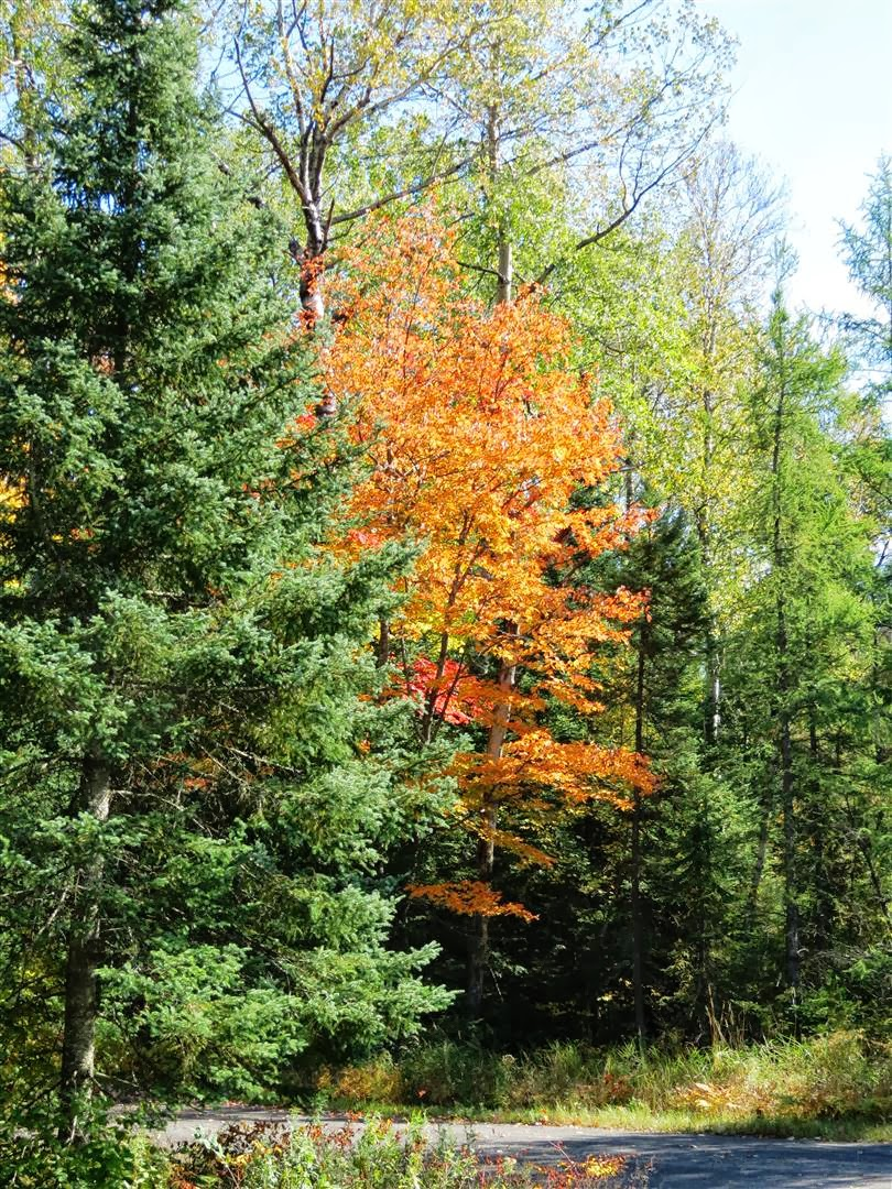 The Fall Color Report 2013 – Black Spruce Hound